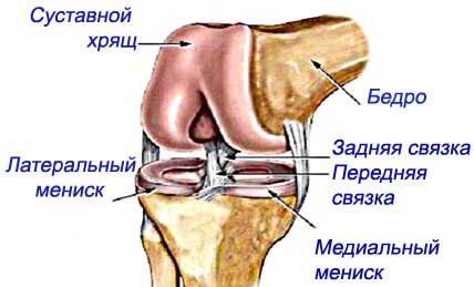 Сгибательной разгибательной щели коленного сустава восстановления баланса связочного аппа лечебная гимнастика при травме коленного сустава